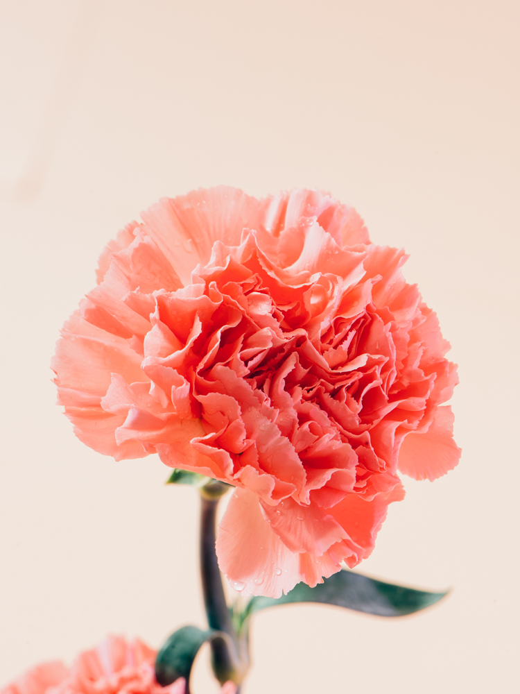 #vase #flower #pink // Olfattorio by Cristina Celestino | Flodeau.com